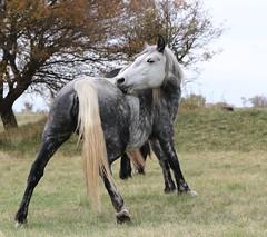 Amirosso Grosso (Amir Guso) Tags: tier pferd horse animal autumn herbst bosnia travel canon 70d eos nature natur wildlife outdoor