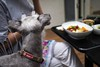 Lunch time (Yorkey&Rin) Tags: 2017 dog friend japan lumixg20f17 lunch may miniatureschnauzer olympus rin shizuoka u5256509 vegetablecurry vegetables オーガニック ミニチュアシュナウザー ランチ 犬 静岡県 熱海市 野菜カレー 友人