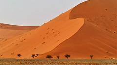 im Sossusvlei (marionkaminski) Tags: namibia sossusvlei afrika africa landschaft landscape paisaje paysage wüste desert desierto düne dune sanddüne panasonic lumixfz1000 bäume trees arbres arbol