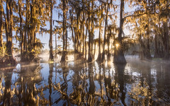 Morning Bliss on the Bayou (rootswalker) Tags: southernunitedstates bayou cypress swamp sunrise misty foggy boat guide ecosystem spanishmoss nikond810