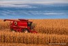 2017 Harvest (Thomas DeHoff) Tags: case ih combine corn iowa red sony a700