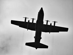 Lockheed C-130 Hercules   Directly Overhead (steveartist) Tags: sonydscwx220 snapseed snapseedfilters stevefrenkel militaryaircraft transportaircraft lockheedc130hercules telephoto monochromatic