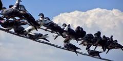 tweet tweet tweet (jvcluis) Tags: tweet bird wired cloud sky rt