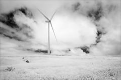 mount-mercer-0564-ps-w (pw-pix) Tags: paddock grass weeds weed plants daisy daisies rocks windmill windturbine windgenerator windfarm electricity power generation renewable hill clouds sky bw blackandwhite monochrome sonya7 irconvertedsonya7 850nminfrared ir infrared mmwf mountmercerwindfarm mountmercer centralvictoria victoria australia