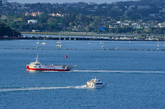 Auckland Ferries (gil278) Tags: northhead auckland nz