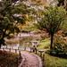 Jardin Japonais - 01
