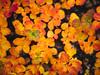Fall (Christine H.G.) Tags: olympus omd em10 microfourthirds mtf μ43 panasoniclumixg20mmf17iiasph pancake lumixg20f17 leaf autumn orange bokeh dof light
