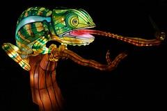 Chinese Lantern Festival (Sautterry) Tags: chineselanternfestival danielstowebotanicalgarden belmont northcarolina