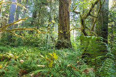 Humboldt Places you love (HSU Galleries) Tags: humboldtstateuniversity humboldt college arcata california humboldtcounty northerncalifornia csu campus university hsu humboldtstate prairie creek redwoods state park