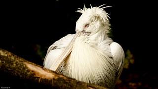 White Bird Portrait