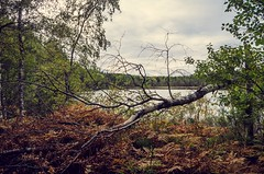 nature by denim (Stefano Rugolo) Tags: stefanorugolo pentax k5 smcpentaxda1855mmf3556alwr nature trees landscape lake foliage filter flickr tones texture hälsingland sweden