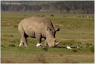 A Rhino Kind of Love