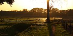 Zomer in oktober (Wim Zoeteman) Tags: web fall autumn herfst