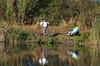IMGP2283 (hlavaty85) Tags: fishermen river řeka labe rybáři