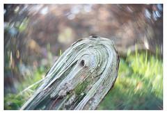 Circularity (leo.roos) Tags: swirly branch broken tak beerzebulten cinelens movielens cmount a7rii taylortaylorandhobson cookekinic1inch15 darosa leoroos