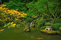 Portland Japanese Garden 4413 C (jim.choate59) Tags: koi fish goldfish pond japanesegarden portland portlandjapanesegarden autumn fallcolors fallseason green jchoate d610 on1pics