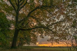 Unter Herbsteichen - under autumn oaks