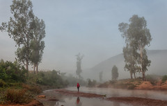 Red sweater (Padmanabhan Rangarajan) Tags: boy walking mists rural india