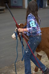 Girl And Her Cow (swong95765) Tags: kid girl county fair cow stick jeans rope walking cute contestant