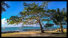 Mauritius - Cap Malheureux (iw2ijz) Tags: mauritius africa coloniafrancese cap malheureux nord north isola isla ilè mare sea albero persone people spiaggia beach paradiso paradise