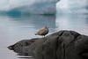 Ilulissat Disko Bay GRB_1225 (Geoff Buck) Tags: greenland ilulissat jakobshavn jacobshaven qaasuitsup disko diskobay iceberg sea ice cloud