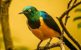 Bird - (3865)