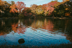 Autumn colors, Tilly Park (instagram.com/lanolan) Tags: autumn capitantillypark day fall fujifilmx70 jamaicaqueens newyork newyorkcity newyorknewyork ny nyc outdoors outside people pond queens thebigapple tillypark trees water