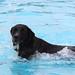 Hundeschwimmen+in+L%C3%BCbbecke