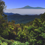 Parque Nacional de Garajonay thumbnail