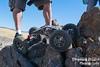 2017 Wild West Crawlfest & RCCA 2017 US Nationals Day 3-368.jpg (Thrashing Dragon Photography) Tags: motoronaxle super moa rcca2017usnationals rctruck rccrawler remotecontrol crawler