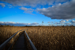 Pathway (haapamakimikko) Tags: path sky reed autumn clouds finland