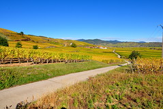 the road of wine (Haut-Rhin - F ) (pietro68bleu) Tags: vignoble alsace hautrhin vin route automne