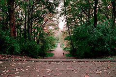 Irgendwo im Wald | Toruń (Lilly Cherry) Tags: wald herbst grün thorn forest autumn green toruń polska