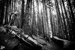 Evolution of Ladders (Jeremy J Saunders) Tags: bellingham washington mountainbike mtb ladderbridge blackandwhite bw galbraith evolution jeremyjsaunders jjs nikon d850 forest trees