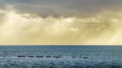 Seals on a sandbar (stevepe81) Tags: himmel wolken 6000 2017 seal landschaft alpha nordsee wasser meer seals sony norderney outdoor lightroom sea ozean