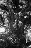 EDU R9 Zeiss35-2.8-12 (ayenoppa) Tags: r9 35mm film bw