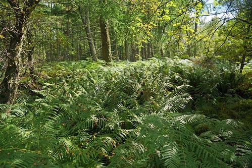 2017-08-26 09-09 Schottland 556 Bennachie, Mither Tap Trail