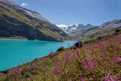 Valais lac de Moiry-8139.jpg (jecogs) Tags: grimentz suisse valdanniviers valdemoiry valais