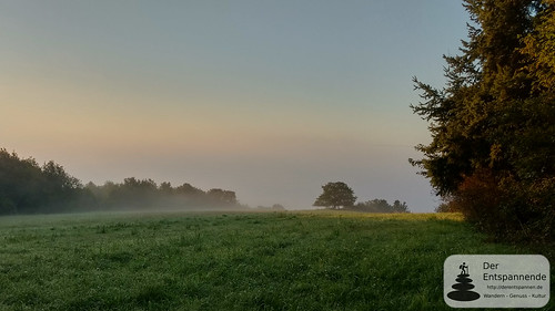 Morgennebel in der Pfalz