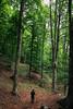 Tra la natura (SDB79) Tags: natura bosco sottobosco alberi foresta abruzzo parconazionaleabruzzo sentiero trekking