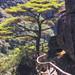 Tree - Wugongshan, China