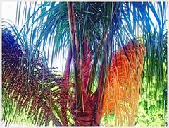 Seeds & Flower (plismo) Tags: samsungsght959p samsung sght959p seeds flower palm iona florida unitedstates plismo tree fortmyers