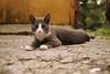 Garry, the Soultaker (designerus) Tags: pet cat soul catography garry undertaker eyes lumix green
