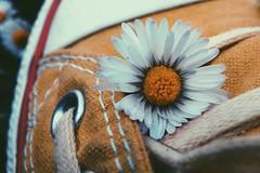 (frogghyyy) Tags: flower dettagli macrophotography daisy yellow details macro