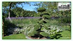 1 of 13 photos from Sofiero Palace (13) (andantheandanthe) Tags: plant plants flower flowers blumen blossom garden park sofiero skåne