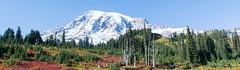 2017 Pac NW Mt Rainier-180 (Michael L Coyer) Tags: parks nationalparks usnationalparks unitedstatesnationalparks mountrainiernationalpark mtrainiernationalpark mountrainiernatlpark mtrainiernatlpark mountrainier mtrainier mountain mount washington