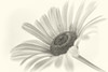 100X 2017 - 72/100 Photos with Primes Lenses Only (norasphotos4u) Tags: macro canon7dmkii ©noraleonard flickr reflection 100x2017 topazedit canonef100mmf28lisusmmacro flowersplants social monotone white 100xthe2017edition image72100