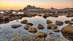 Monterey (Bob.Z) Tags: pacificgrove california unitedstates us monterey usa ca ocean pacific tree cypress