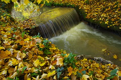 Autumn flow (Baubec Izzet) Tags: baubecizzet pentax autumn leaves water nature flickrunitedaward