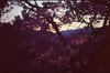 (✞bens▲n) Tags: pentax lx velvia 100 mamiya 50mm f2 film analogue slide japan nagano cherry blossoms sakura evening light flowers tree pink